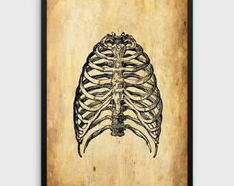 Rib Cage Print | Human Anatomy - Vintage Human Rib Cage - Skeleton Illustration - Printable Art - Single Print #354 - INSTANT DOWNLOAD