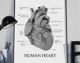 Human heart print, anatomy print, heart illustration, Anatomy poster, Educational poster, Medical poster,