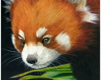 ORIGINAL Red panda. Colour Pencil Art