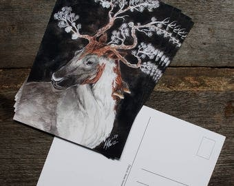 Rangifer Pinus postcard print