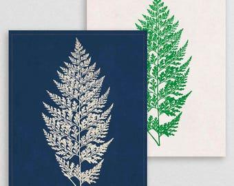 Classic Fern II- Botanical Decor- Botanical Gifts- Prints for Decor- Botanical Art- Ferns- Nature -Vintage -Vintage Prints -Vintage Art