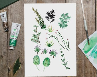 Plants - Art Print, Botanical Art