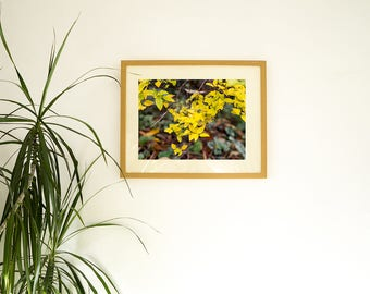 Autumn leaves photo print