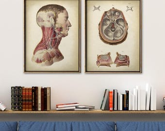 Anatomy Poster SET of 2, Anatomical Print, Human Body Head, Anatomy Chart, Medical Print, Anatomy Chart, Antique Anatomy