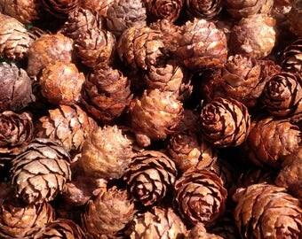 500 Small Pinecones,Mini Pinecones,Tiny,Craft Supply,Wreath Material,Christmas,Wedding,Decor,Natural,Pine Tree,Real Pine Cones