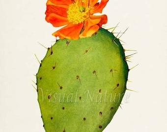 Nopal De Cerro Art Print, Botanical Art Print, Cactus Wall Art, Cactus Botanical Print, green orange art print