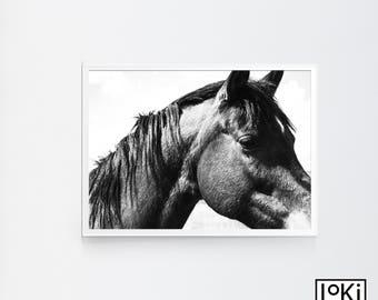 Horse Print, Horse Poster Art, Horse Print Photography, Horse Photography, Horse Wall Art Large, Horse Printable Art, Horse Poster