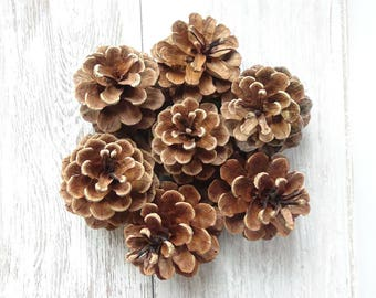 Medium pine cones,5-7cm pine cones,Pinecones,Pinecone,Wedding Pine Cone,Pine Cone supply,Pine Cone Decor,real pine cones,natural pinecones