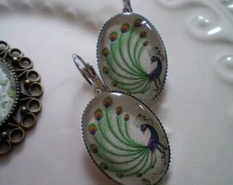 Peacock Cabochon glass medium 25x18mm - nickel free Silver earrings
