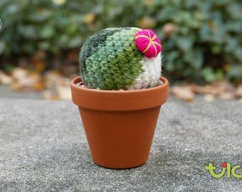 L - Barrel Cactus