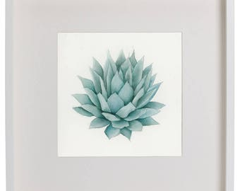 Small Agave Succulent Watercolor Painting