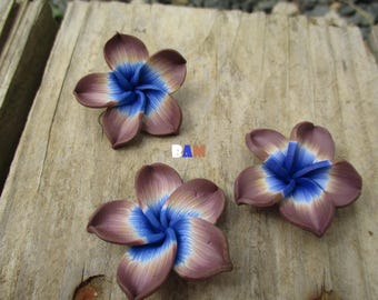 Taupe blue plumeria flower