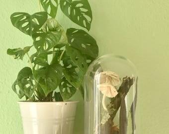 Botanische kunst. Glazen stolp met een textile wereld. Handgemaakt in Herfst thema. Paddestoelen