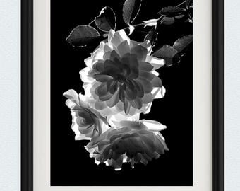 Translucent Roses - Black and White - Wall Art - Flower Photography - Rose Print - Fine Art Photography - Floral Photography - Flower Photo