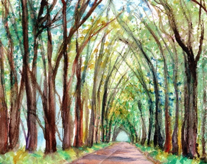 kauai tree tunnel watercolor painting hawaiian paintings tunnel of trees koloa original watercolour kauai artist marionette kauai arts
