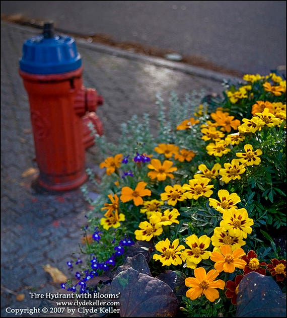 FIRE HYDRANT with BLOOMS, Vancouver, Clyde Keller photo, 2007