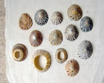 drilled shell pendants - bulk lot of real sea shells with multiple holes - natural organic bohemian jewelry supplies