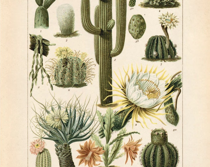 Featured listing image: Palm Springs Cactus Chart Print. Vintage Kakteen Botanical Desert Educational Diagram Cactus Desert Poster Pull Down Chart flowers CPN001