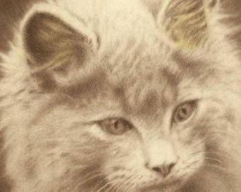 Adorable Kitten on Vintage Birthday Postcard Handsome Is As Handsome Does Solomon Brothers Publishing