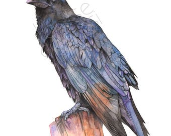 Crow print of watercolor painting, 5 by 7 size, C22517, Raven print, Crow watercolor painting print, Raven watercolor painting print,
