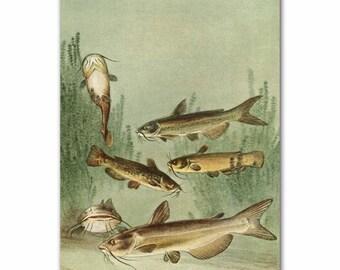 "Vintage Fish Print (Rustic Cabin Decor, 1930s Fishing Art)--- ""Catfish"" No. 105"