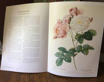 Vintage Color Lithograph Print- Damascene Rose