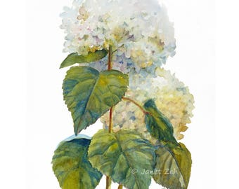 Original watercolor hydrangea painting, 11x14 impressionist wall art, Unframed floral white flower garden decor by Janet Zeh