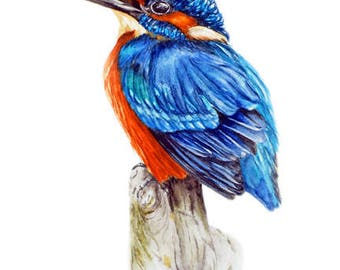 Kingfisher II -  art print, kingfisher painting,  bird paintings, watercolour print, watercolour bird painting