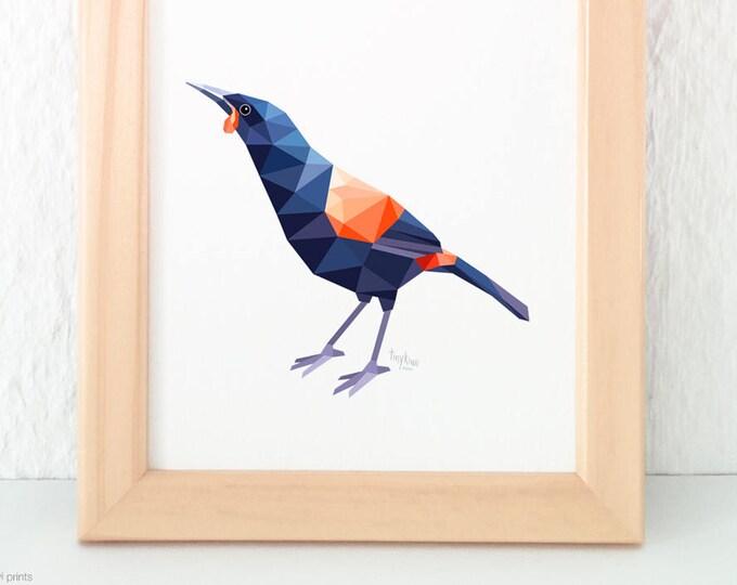 New Zealand Saddleback print, Kiwi artist, Tieke, Kiwiana, Kiwi home decor, Kiwi art, New Zealand bird art, Kiwi birds, New Zealand forest