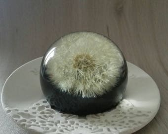 Paperweight Dandelion paper weight sphere Unique gift Real dandelion head Make a wish Desk housewarming gift Bosslady gift for Father Bride
