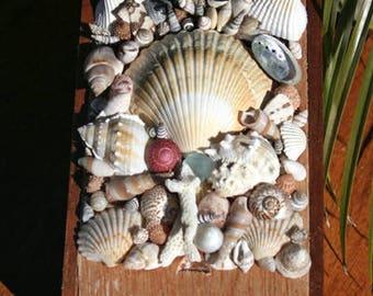 Shell Topped Sea-gar Box