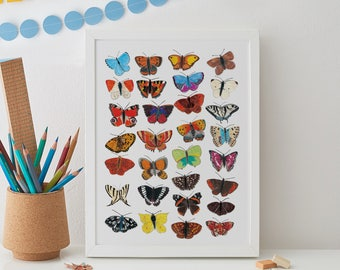 Butterfly Wall Art, Butterflies Print, Insect Art, Beetle Print, Home decor, Gift for her, Butterfly decor, Lady Bugs, Butterfly Art