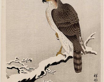 Goshawk on snow-covered branch Koson Ohara Japanese woodblock print reproduction