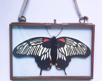 Cream Papercut Butterfly in Vintage Frame