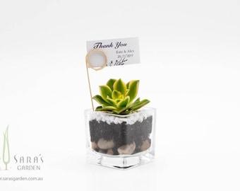 Wedding favour succulent terrarium, mini glass terrariums, wedding bombonieres, succulent wedding favours - Minimum order 30