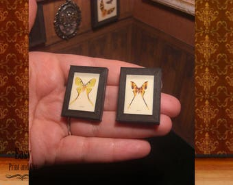 MINIATURE  framed taxidermy . two butterflies. Doll house decoration. oddities . video tutorial . Instant Digital DOWNLOAD-  1:12 th