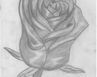 Pencil drawing of a rose - rose sketch - rose drawing - rose illustration