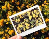 Original Polaroid Floral ...