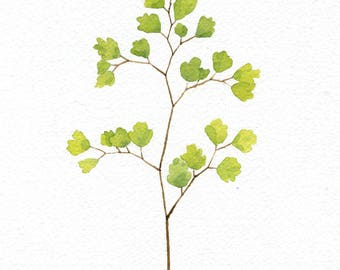 ORIGINAL Maidenhair Fern - Watercolor Painting