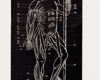 Antique Print from 1886 ANATOMY Chart Print  Lithograph of a Human Body Muscles t in black and white, Vintage Anatomy Print