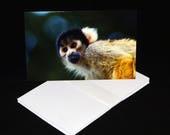 Squirrel Monkey Greetings...