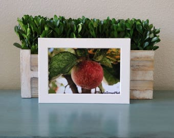 Apple Orchard, 4x6, print, image, california, art and collectibles, nature photography, landscape, fall, autumn, leaves