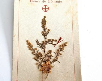 antique french religious herbarium card, pressed flowers from Bethany