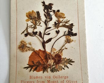 antique french religious herbarium card, pressed flowers from Mount of Olives
