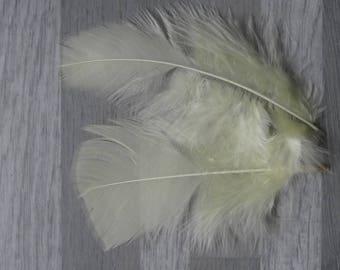 Set of 20 soft yellow Turkey feathers