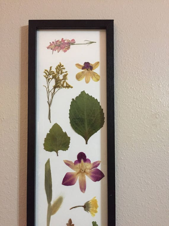 Botanical Sampler- Orchid Flower- Pressed Flower Art- Framed Botanical Art- Vintage Framed Botanical - Purple & Green- Botanical Decor