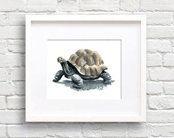 Tortoise Art Print - Animal Art - Wall Decor - Watercolor Painting