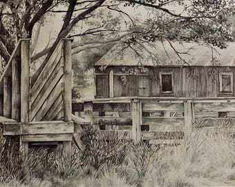pen and pencil drawing/ illustration, small print - sheep race and barn, Hahei, NZ
