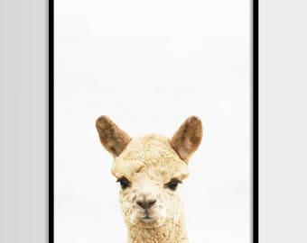 Alpaca print, Nursery decor, Animal art, Wall Art, Minimalist, Digital art, Printable, Digital print Instant Download 8x10, 11x14, 16x20