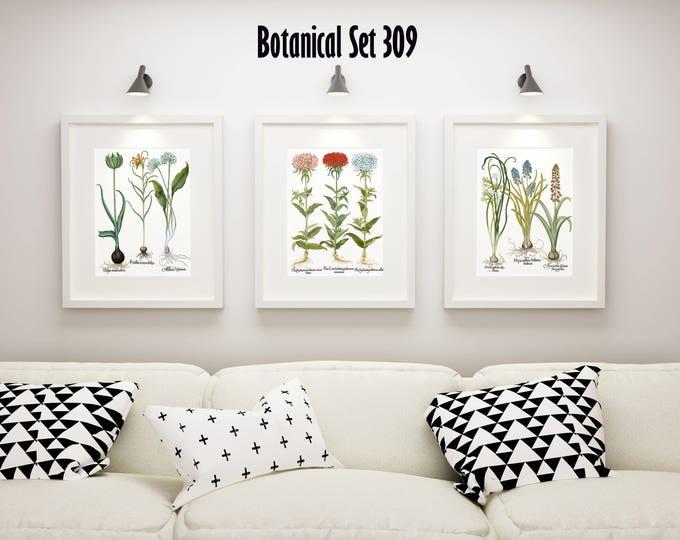 Botanical Print Set of 3, Framed Botanical Art, Vintage Floral Prints, Besler Botanical Plates, Lake House Decor, Botanical Print Sets